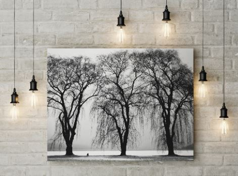 nature-black-and-white-canvas